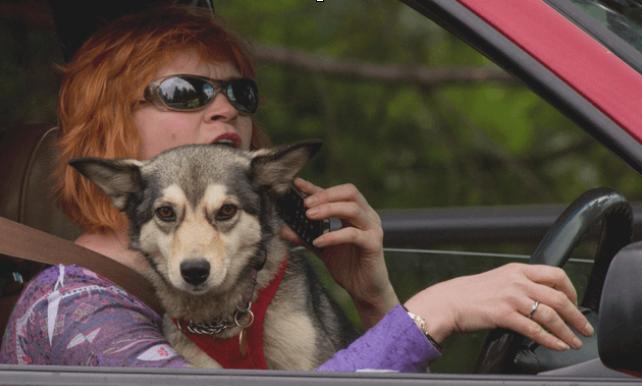 Gambar ini menunjukkan seorang wanita dan seekor anjing sedang duduk di kursi pengemudi