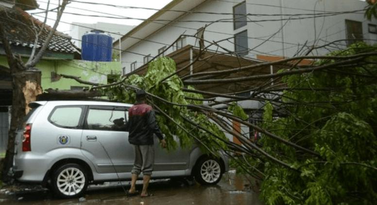 Gambar ini menunjukkan sebuah Mobil warna silver tertimpa pohon yang tumbang