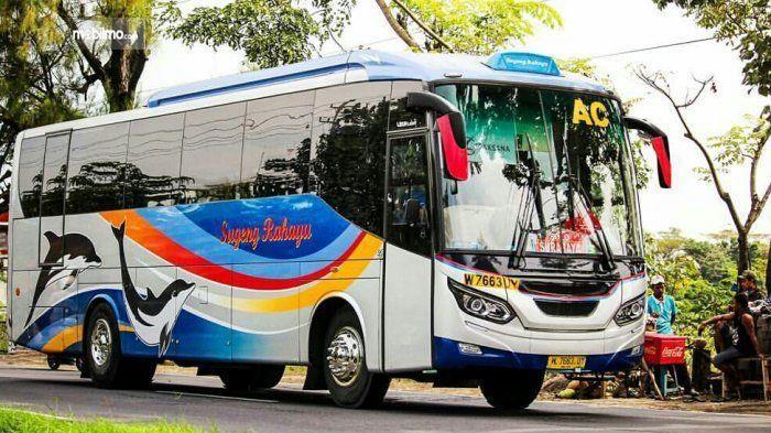 Gambar yang menunjukan armada bus Sugeng Rahayu