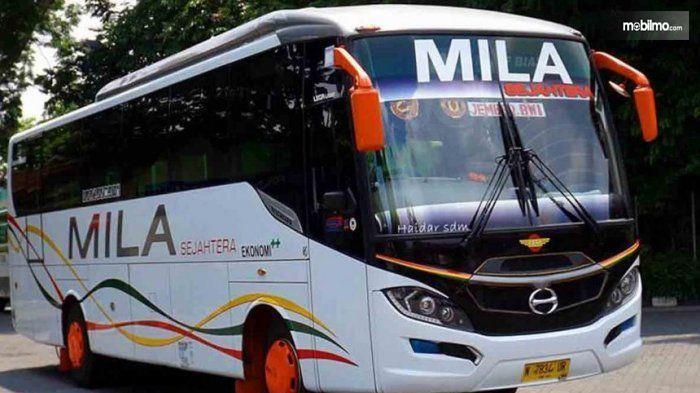 Gambar yang menunjukan armada bus Mila