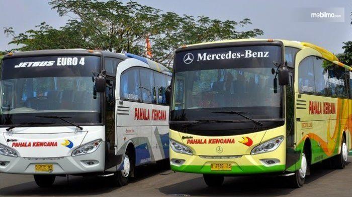 Gambar yang menunjukan armada bus Pahala Kencana