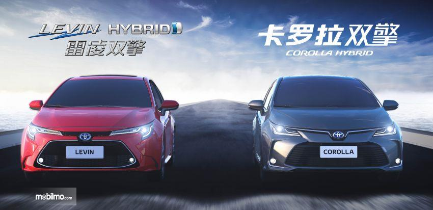Gambar Toyota Corolla Altis dan Toyota Levin