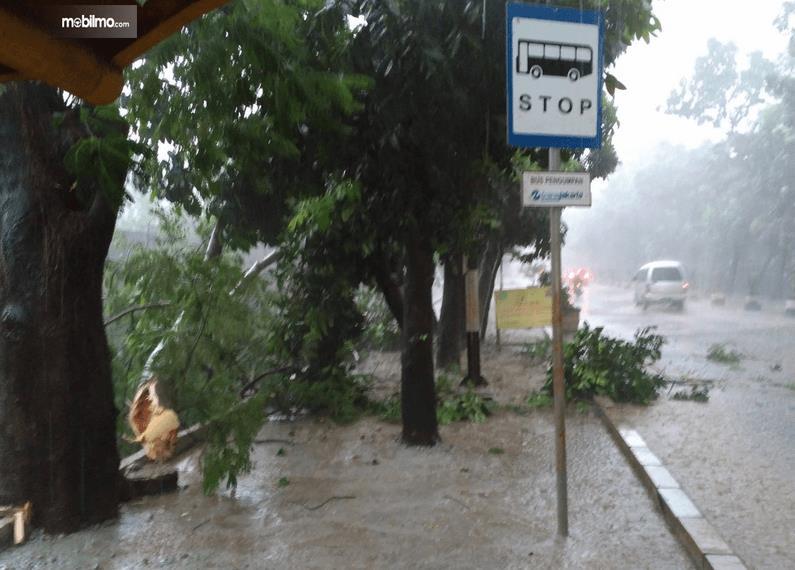 Gambar ini menunjukkan ranting pohon yang jatuh dan terdapat tanda pemberhentian bus