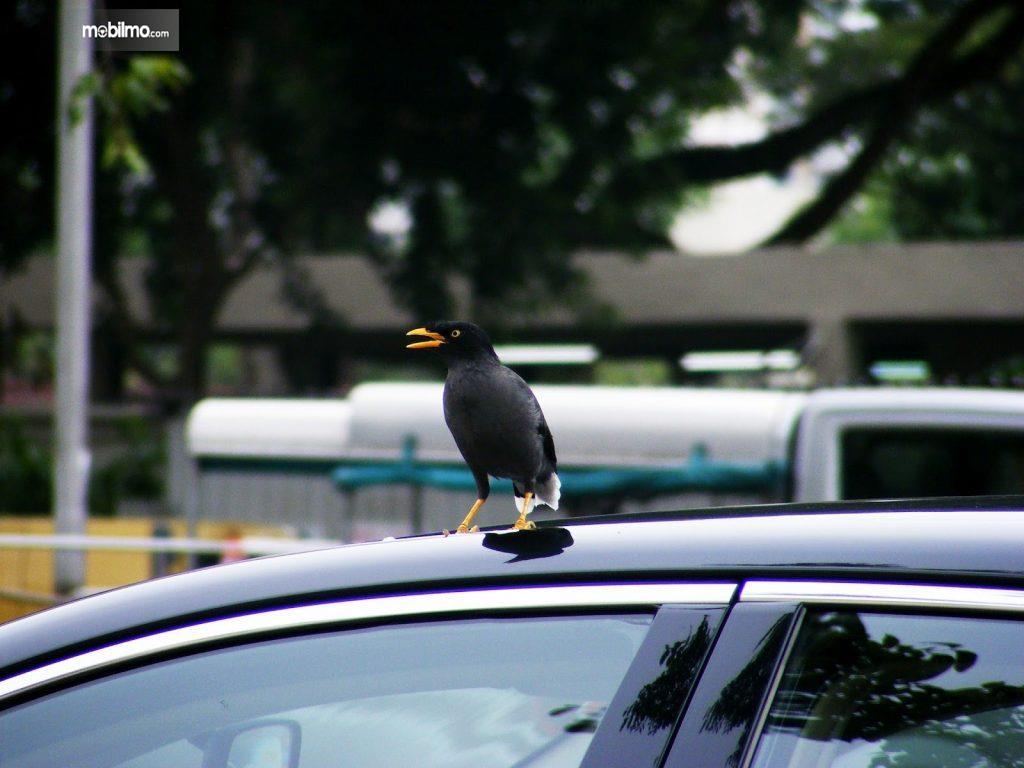 Foto burung diatas mobil