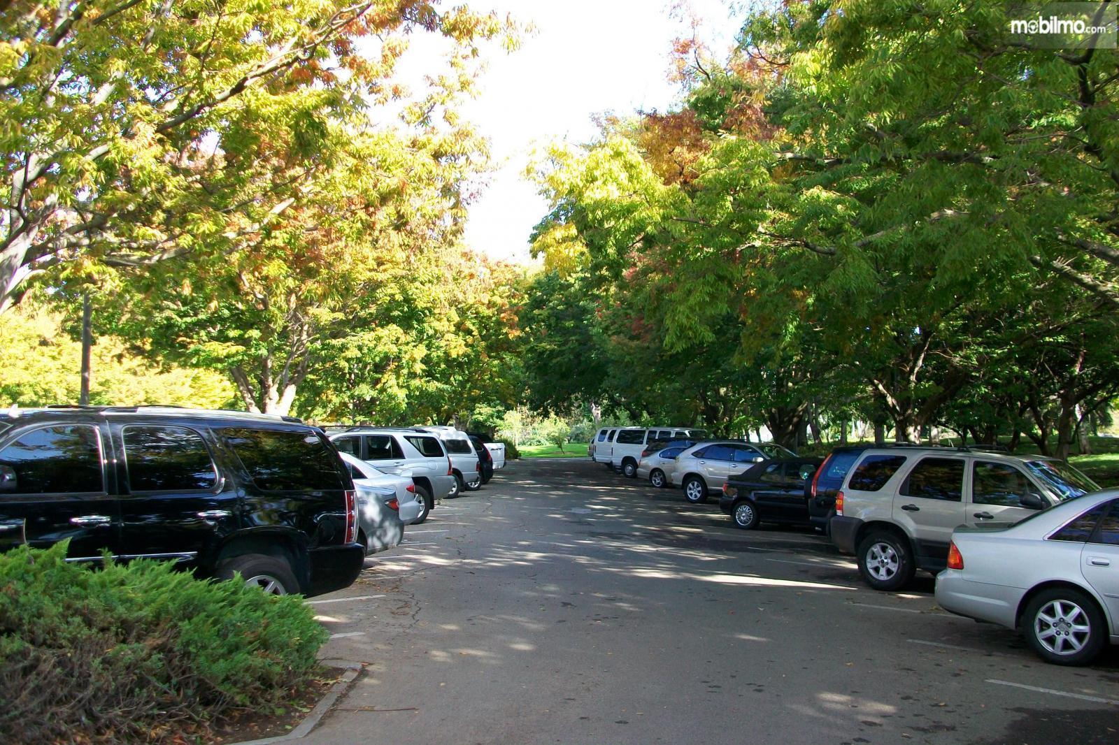 Foto mobil diparkir di bawah pohon