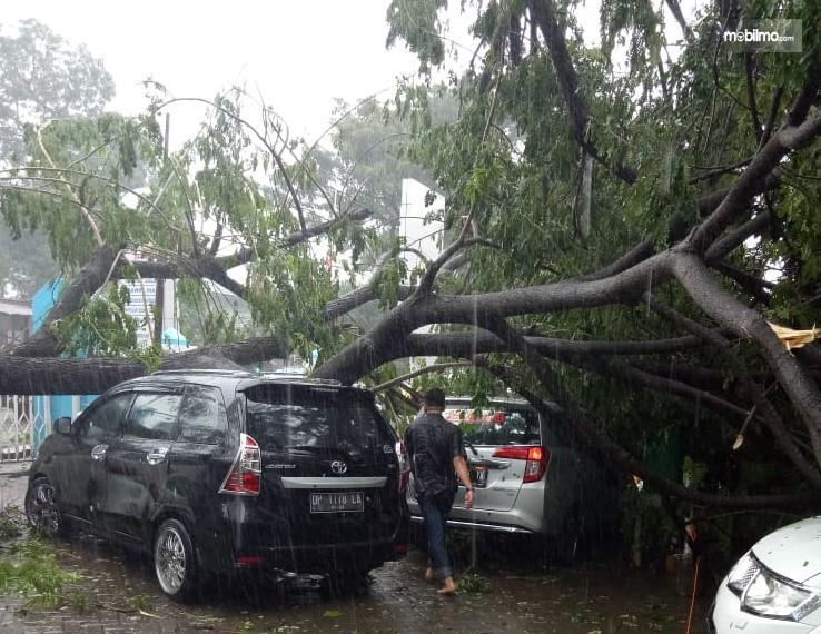 Foto mobil tertimpa pohon tumbang