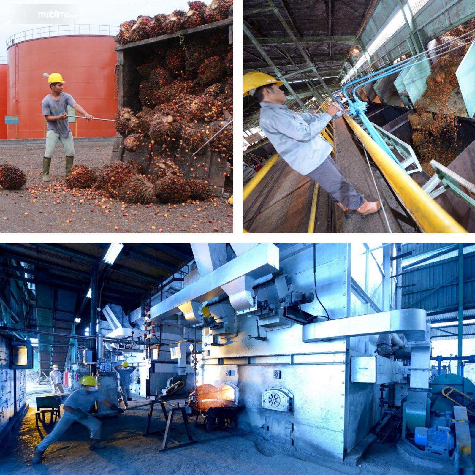 Foto menunjukkan pabrik pengolahan kelapa sawit
