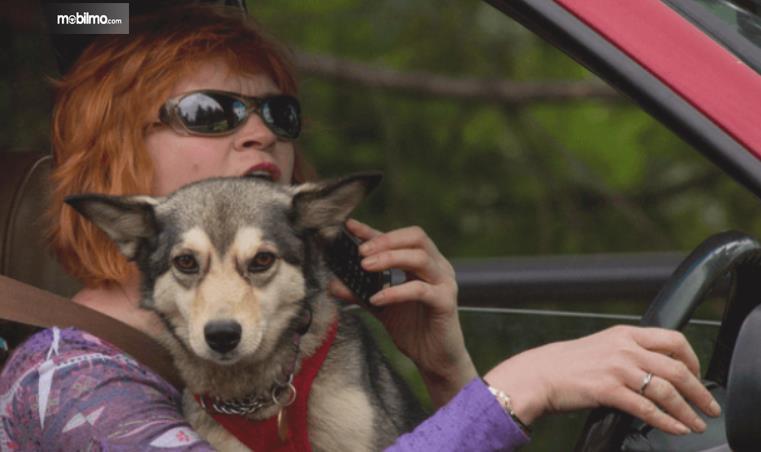 Gambar ini menunjukkan pengemudi wanita dengan anjing di pangkuannya