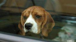 Dari Penelitian, Berkendara Dengan Hewan Peliharaan Bisa Kurangi Stress Pengemudi