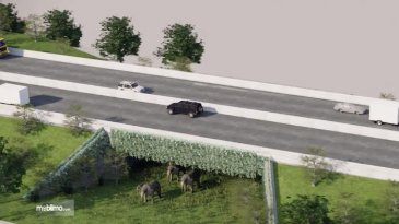 Menarik, Gajah Boleh Menyeberang di Jalan Tol Trans Sumatera